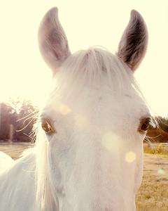Horses 138