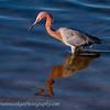 20120129_Bolsa Chica Reserve_3778