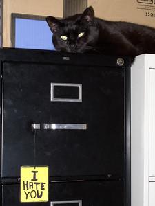 Darkside Kitty