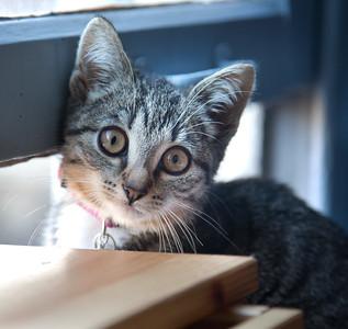 A kitten called Niña