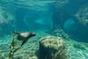 Under Sea Lion Cove