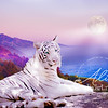 White Tiger Moon