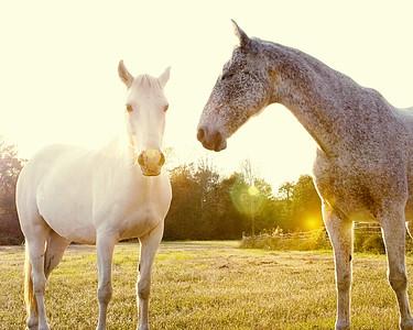 Horses 144-Edit copy