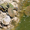 Five Different Kinds Of Turtles