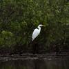 Everglades, 2015
