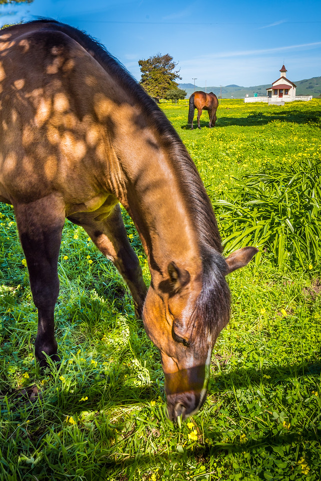 Pastoral Scene With Two Grazing Horses