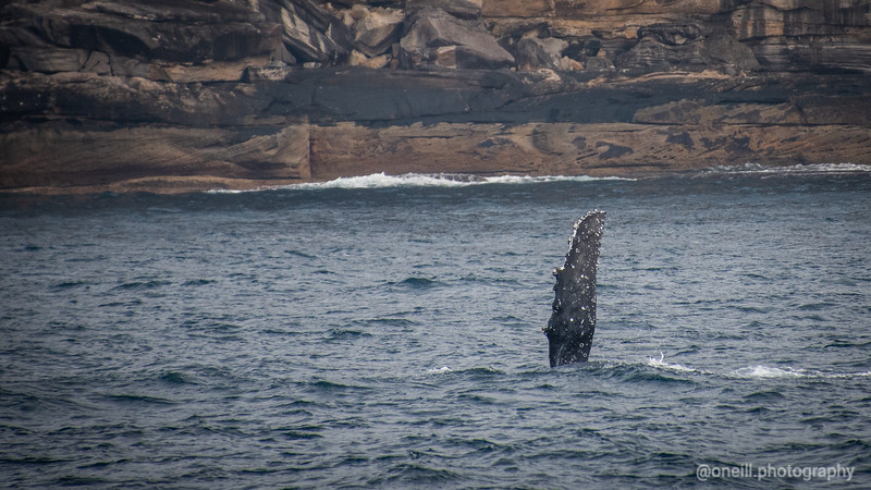 Whale Watching July 2020
