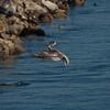 021413 Coast Guard Pier - Monterey 013