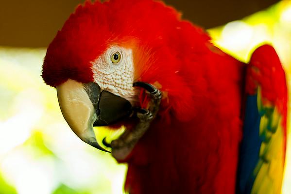 Plotting Parrot