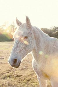 Horses 113