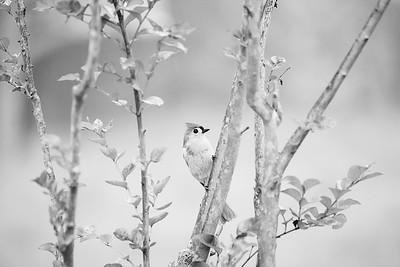 earlybird2 019