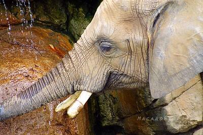 Elephant Cooling Off
