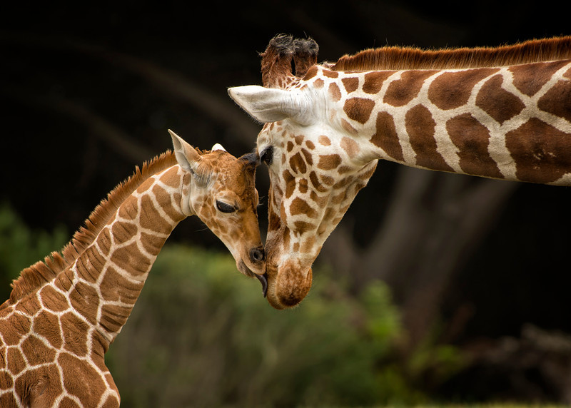 Animal Moments