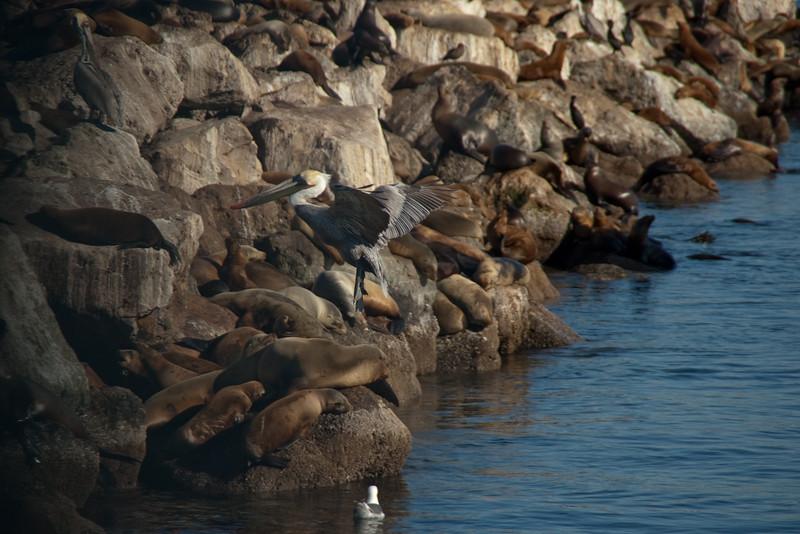 021413 Coast Guard Pier - Monterey 016