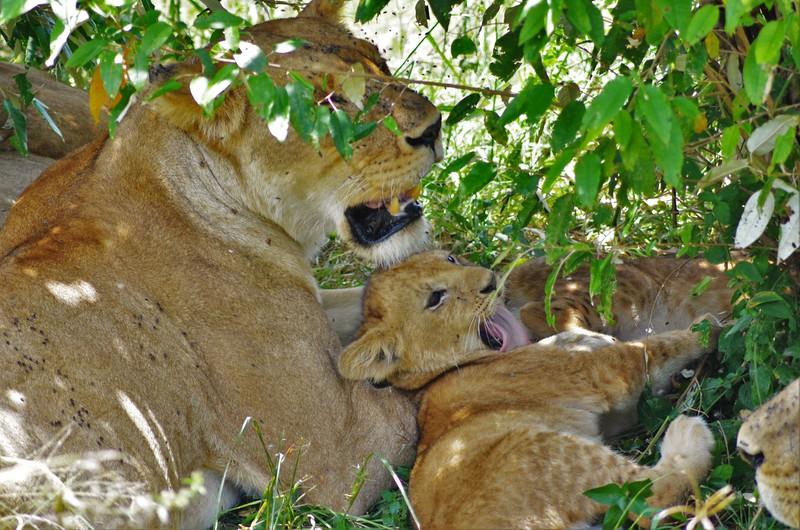 Yawning Family