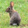 Burleson Bunny Spots Me