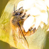 Bee in Artistic Filter