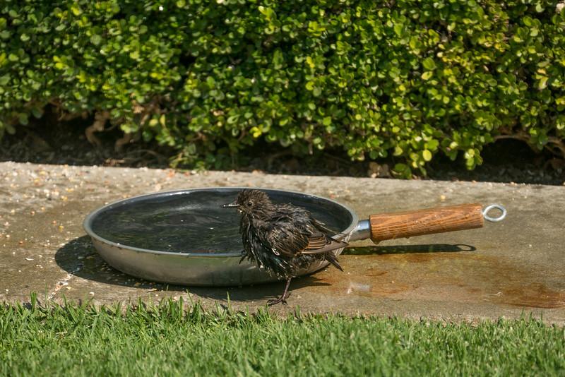 082816 Bird Bath - Salinas 011