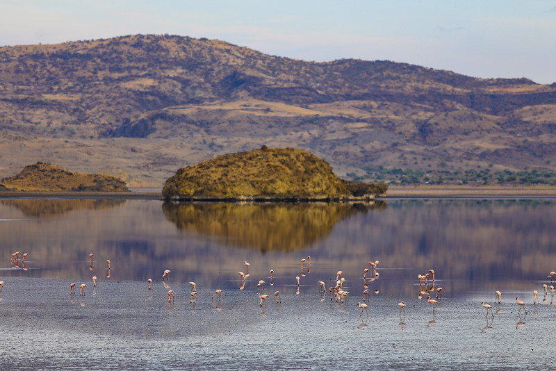 Flamingoes at Lake Natron in Tanania