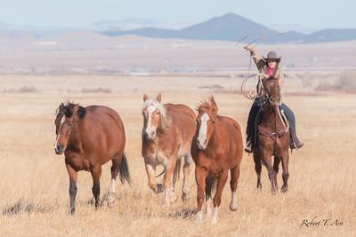 Music Meadows Ranch 14