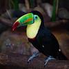 Costa Rica, 2010