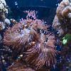 112716 Monterey Bay Aquarium - Monterey 063 8x10L