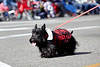 Small dog wearing a Jacket