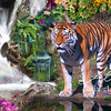 Tiger Nature