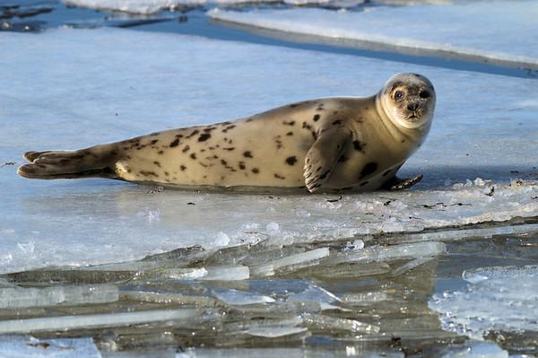 Taken in Seal Cove, NL, Canada
