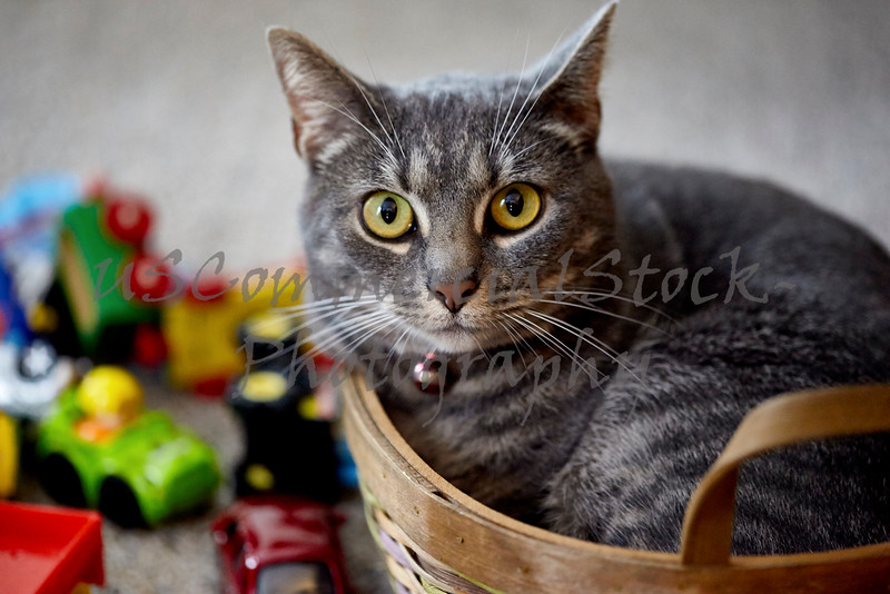 Gray cat curled up in a Basket