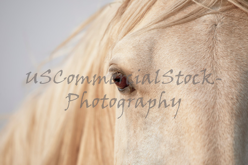 Close up of the eye of a young horse