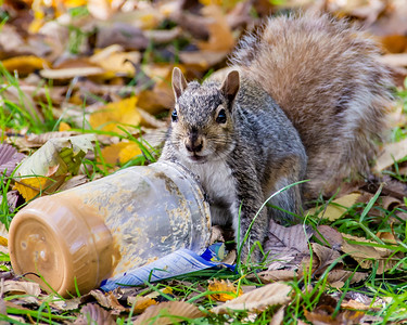 Squirrel and Peanut Butter