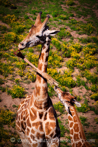20160327_San Diego Zoo Safari Park_1931