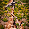20160327_San Diego Zoo Safari Park_1931