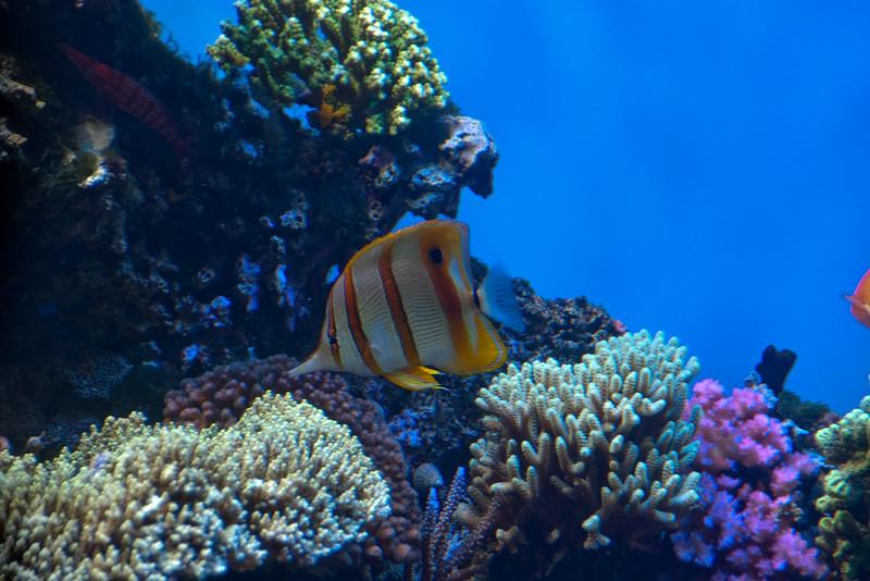 122912 Monterey Bay Aquarium 001