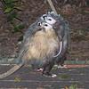 Possum Butt