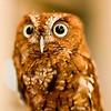 Whooo Me?