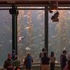 031917 Monterey Bay Aquarium - Moores - Monterey 003