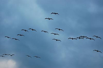 Flock 22
