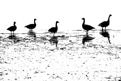Duck Silo