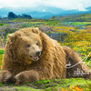 Cascadian Flower Bear