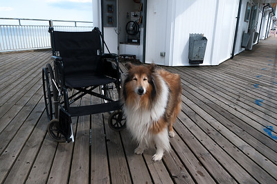 Dog and wheelchair