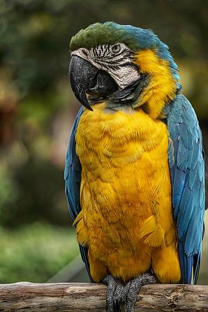 Parrot Look