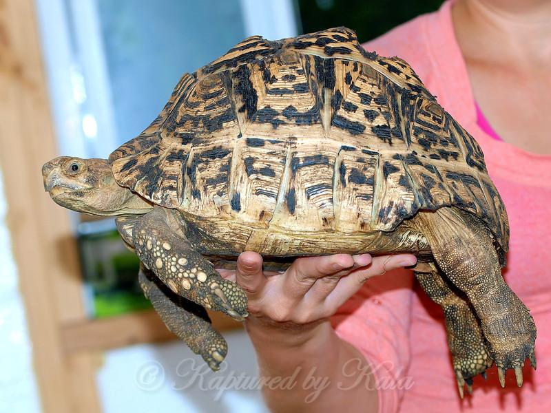 Laid Back Tortoise