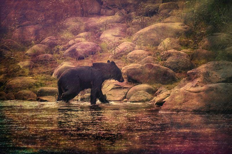 Black Bear Blues