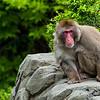 Shifty Monkey