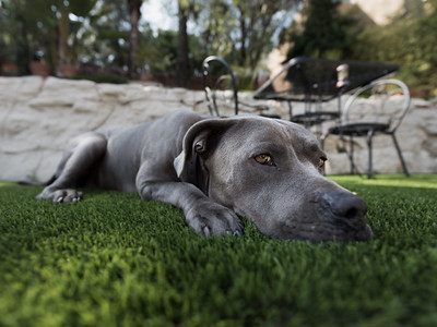 Blue Pit in Backyard