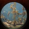 031917 Monterey Bay Aquarium - Monterey 008