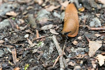 Naked Snail