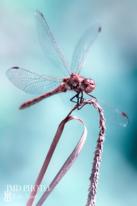 Beautiful aesthetic portrait of a dragonfly
